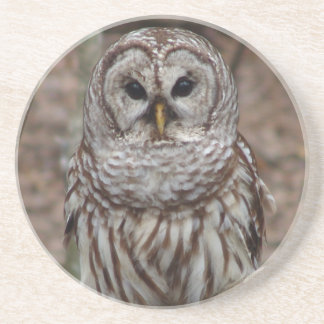 Barred Owl Beverage Coaster