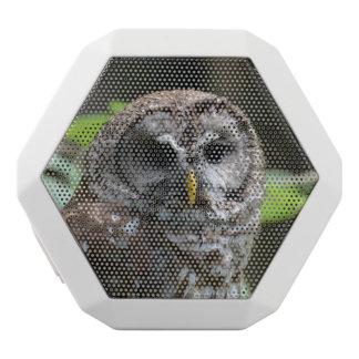 Barred Owl White Boombot Rex Bluetooth Speaker