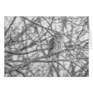 Barred Owl Card