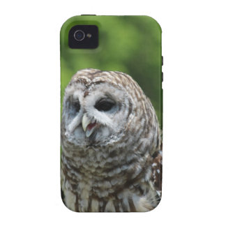 Barred Owl iPhone 4/4S Cover
