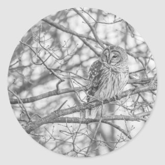 Barred Owl Classic Round Sticker