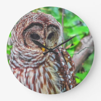 Barred Owl Clocks - Square or Round
