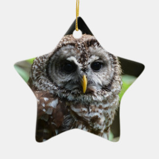 Barred Owl Christmas Tree Ornaments