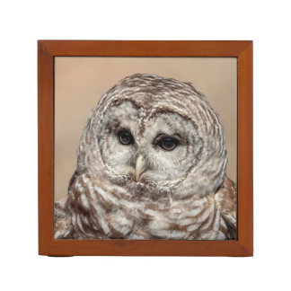 Barred Owl Desk Organiser