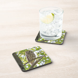Barred Owl Drink Coaster