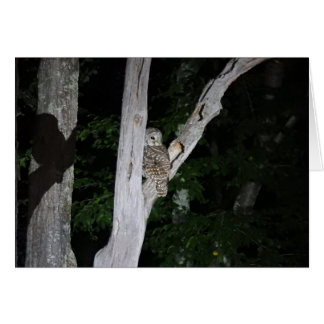 Barred Owl Greeting Card, Blank Inside Card