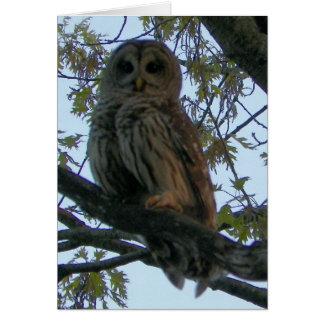 Barred Owl (Hoot Owl) Greeting Card