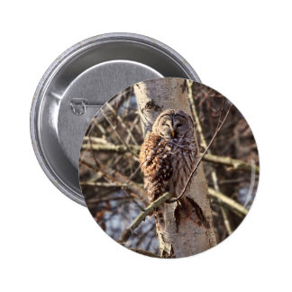 Barred Owl in a Birch Tree Photo Pinback Buttons