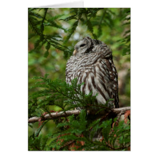 Barred Owl in a Giant Sequoia Tree Greeting Card