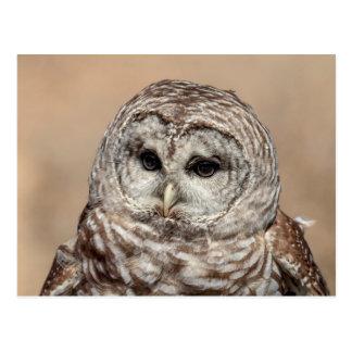 Barred Owl in flight Postcard
