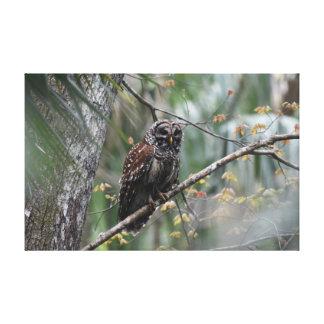Barred Owl in Old Growth Hammock Canvas Print