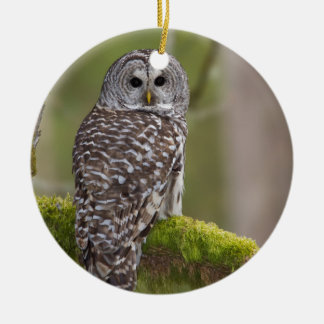 Barred Owl in the old growth Round Ceramic Decoration