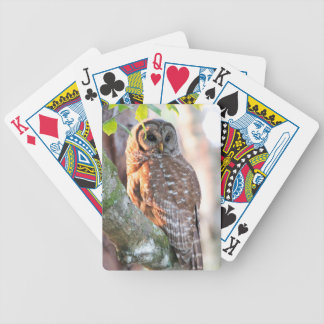 Barred Owl in Tree at Sunset Poker Deck