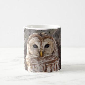 Barred Owl in Tree Mug