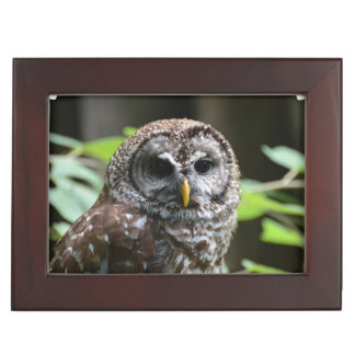 Barred Owl Keepsake Boxes