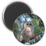 Barred Owl Magnet