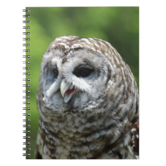 Barred Owl Spiral Note Books