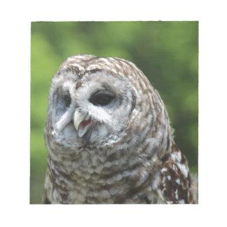 Barred Owl Scratch Pad