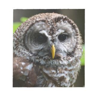 Barred Owl Scratch Pads
