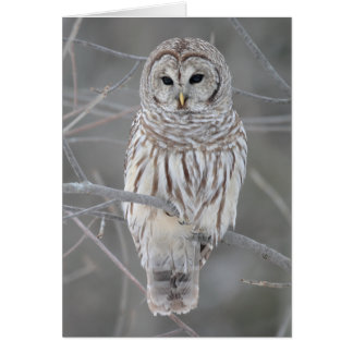 Barred Owl on Branch with Facts Greeting Card