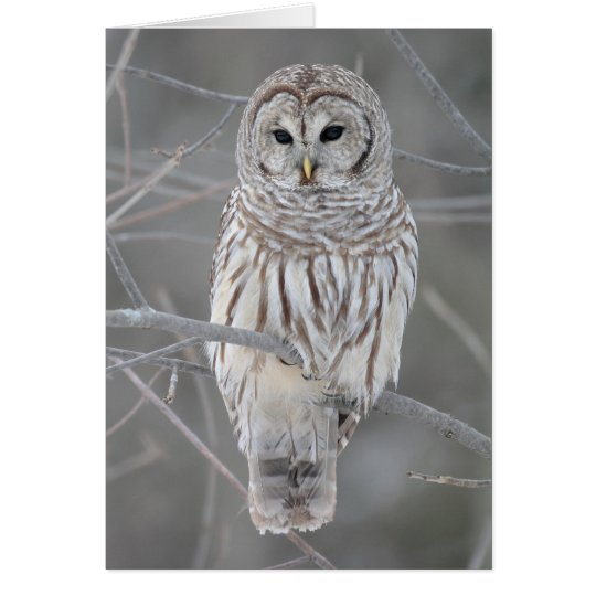Barred Owl on Branch with Facts Card