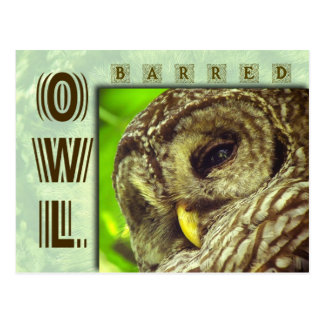Barred Owl or Hoot Owl Post Cards