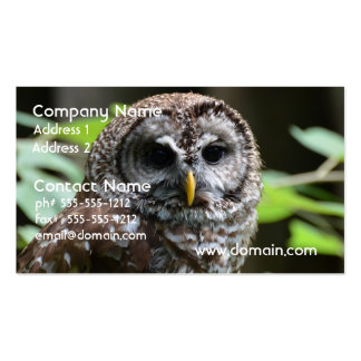 Barred Owl Pack Of Standard Business Cards