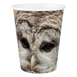 Barred Owl Paper Cup