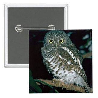Barred Owl Pinback Buttons