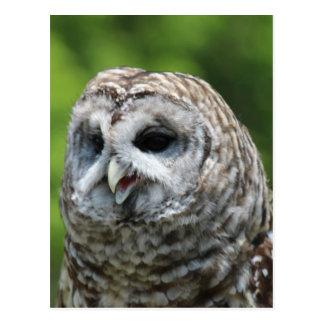 Barred Owl Postcard