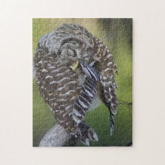 Barred Owl Preening Wildlife Puzzle