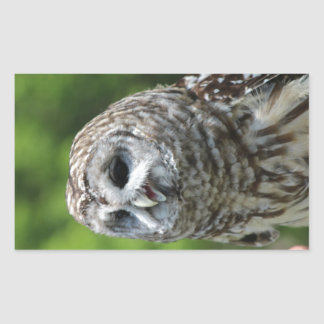 Barred Owl Rectangular Sticker