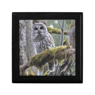 Barred Owl Resting on a Moss Covered Limb Gift Box