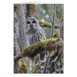 Barred Owl Resting on a Moss Covered Limb Greeting Card