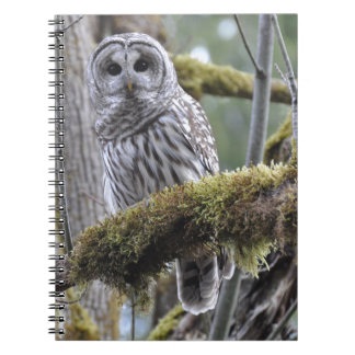 Barred Owl Resting on a Moss Covered Limb Notebooks