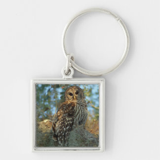 Barred Owl roosting in some Spanish Moss Silver-Colored Square Key Ring