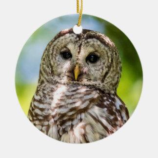 Barred Owl Round Ceramic Decoration