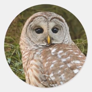 Barred Owl Round Sticker