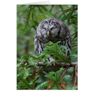 Barred Owl Scratching Greeting Card