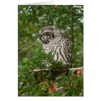 Barred Owl Sleeping in a Tree Greeting Card