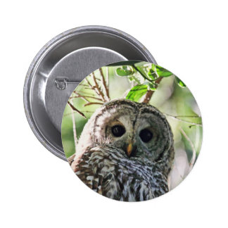 Barred Owl Staring Pinback Button