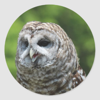Barred Owl Round Stickers