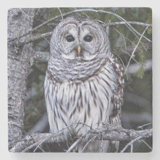 Barred Owl Stone Coaster