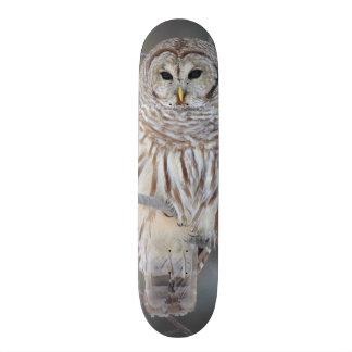 Barred Owl Strix Varia 20 Cm Skateboard Deck