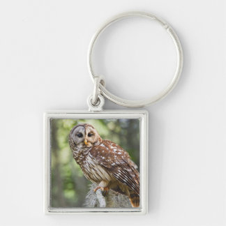 Barred Owl (Strix varia), adult in old growth Silver-Colored Square Key Ring