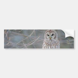 Barred Owl Strix Varia Bumper Sticker
