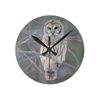 Barred Owl Strix Varia Clocks