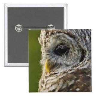 Barred Owl, Strix varia, Michigan Button