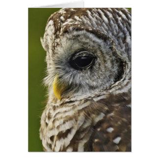 Barred Owl, Strix varia, Michigan Greeting Card