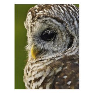 Barred Owl, Strix varia, Michigan Postcard